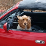Carsick Pets? Here's What to Do