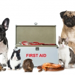 First Aid for Pets & First aid kits Every Pet Owner Should Have