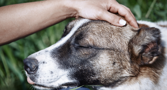 PET EUTHANASIA: HOW TO KNOW YOU ARE MAKING THE BEST DECISION.