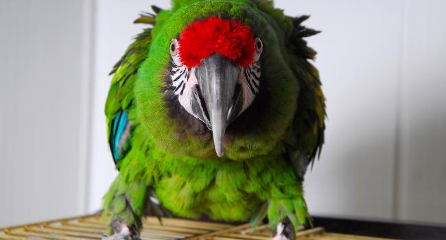 Aggression in Birds