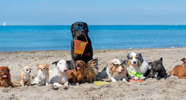 SAFETY TIPS FOR YOUR DOG AT THE BEACH