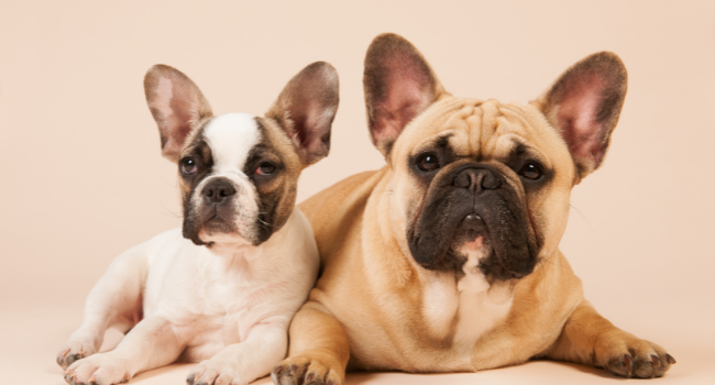 WHY SOME DOG BREEDS ARE MORE EXPENSIVE THAN OTHERS